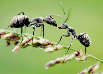 What does the ants